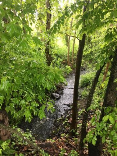 Where the River Runs Through Trees
